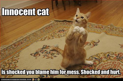 funny-pictures-cat-is-innocent-and-hurt