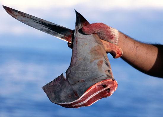http://14bikeco.files.wordpress.com/2009/06/shark-fin.jpg